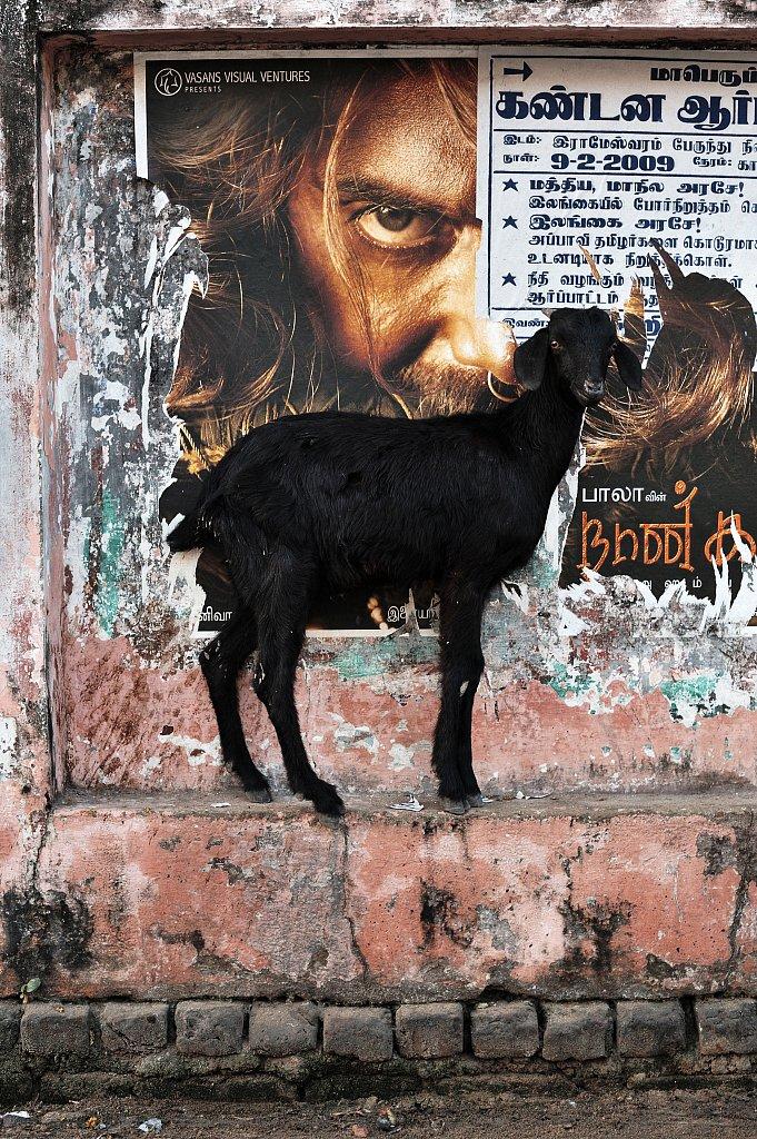 09-Rameshwaram-20090213-893-inde.jpg