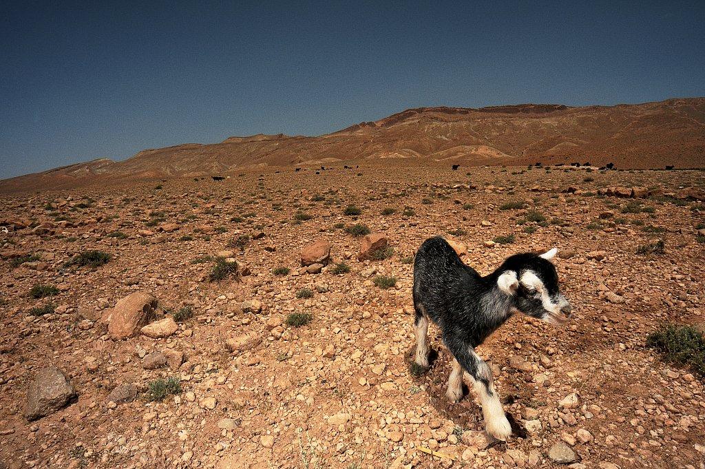 c07-FestivaldesRoses-20090510-101-Maroc.jpg