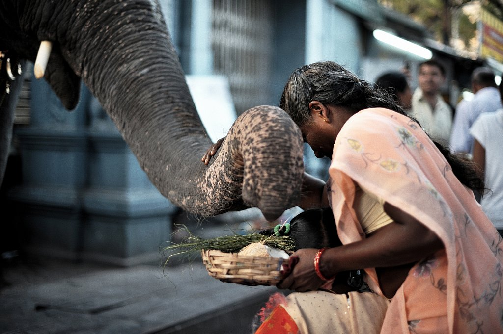 03-elephant-temple-20090118-505-Pondichery.jpg