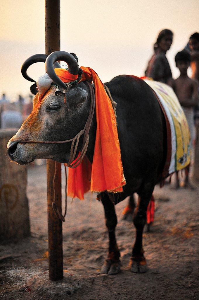 Pelerins-20090213-887-Rameshwarram-web.jpg